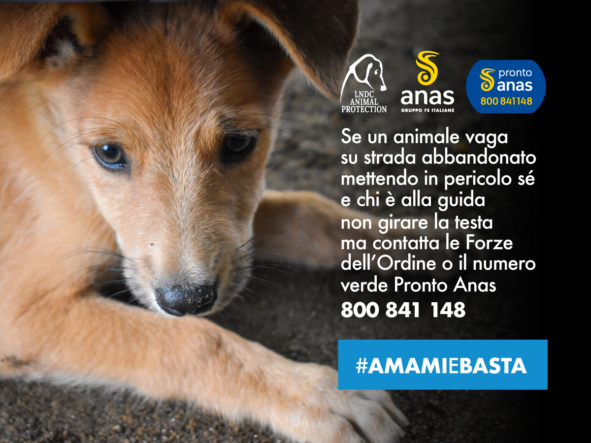 Campagna_ANAS-LNDC_Amami_e_Basta_2021